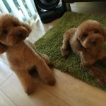 犬にもハナヘナ染め♪ ペット用のシャンプーで愛犬が痒がってしまう。