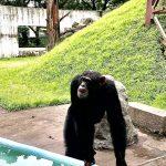 天然ヘナに出会って学んだことその② 類人猿と人類の違い。